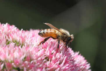 """See What The """"Buzz"""" Is About – Sep. 23, 7 PM"""
